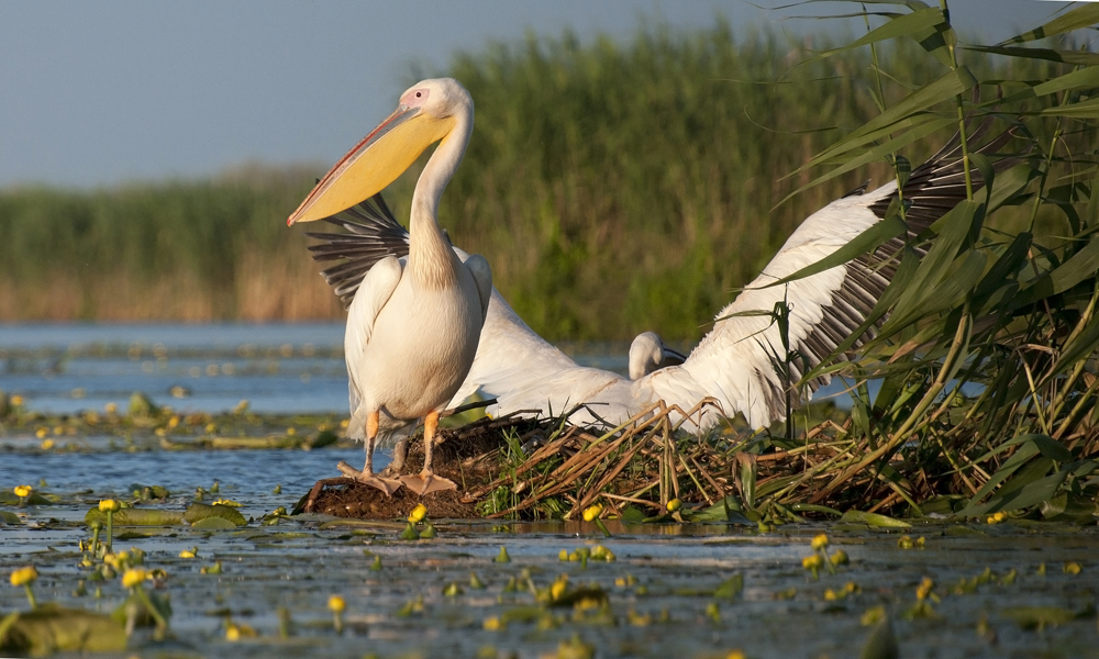 Sakertour Birdphotography TourII.