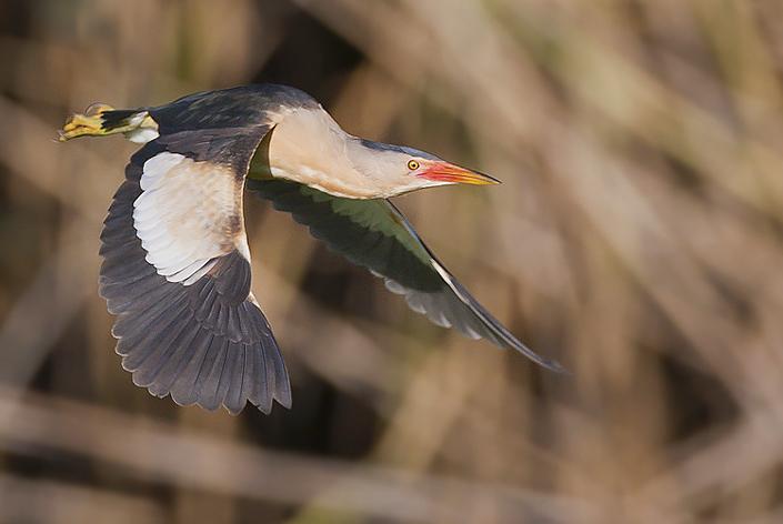 Sakertour Birdphotography TourIII.