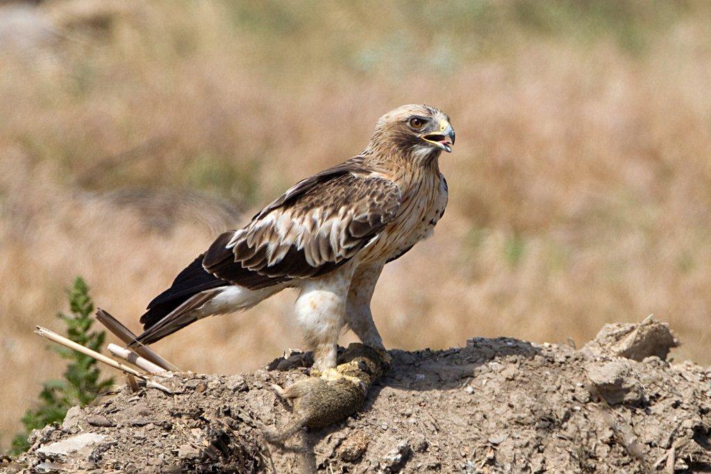 Sakertour Birdphotography Tour III. – Birdwatching & Bird ...