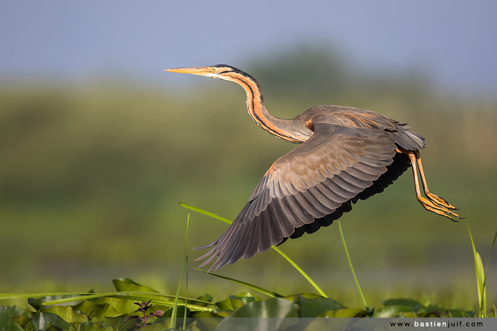 Danube Delta Bird Photography Season in 2016